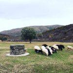 Mrizi i Zanave – Agritourism in Albania – Visit Albania
