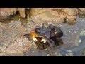 shikoni çfarë i ndodhi gaforres papritur!