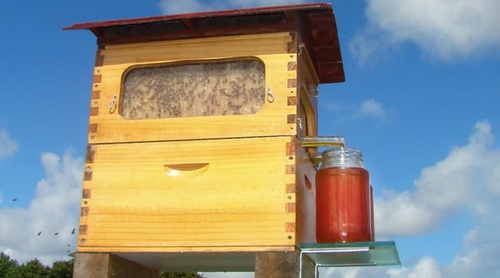 Flow quhet teknologjia më e re për mbledhjen e mjaltit!